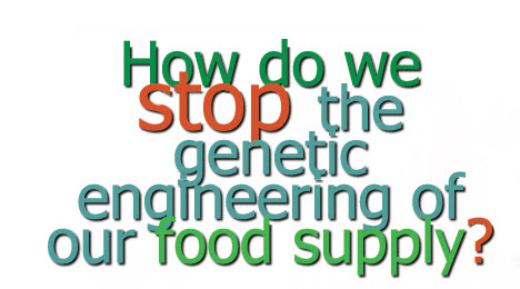 how gmo effect life Gm dna present in animal feed has been detected in the milk and meat that people eat.